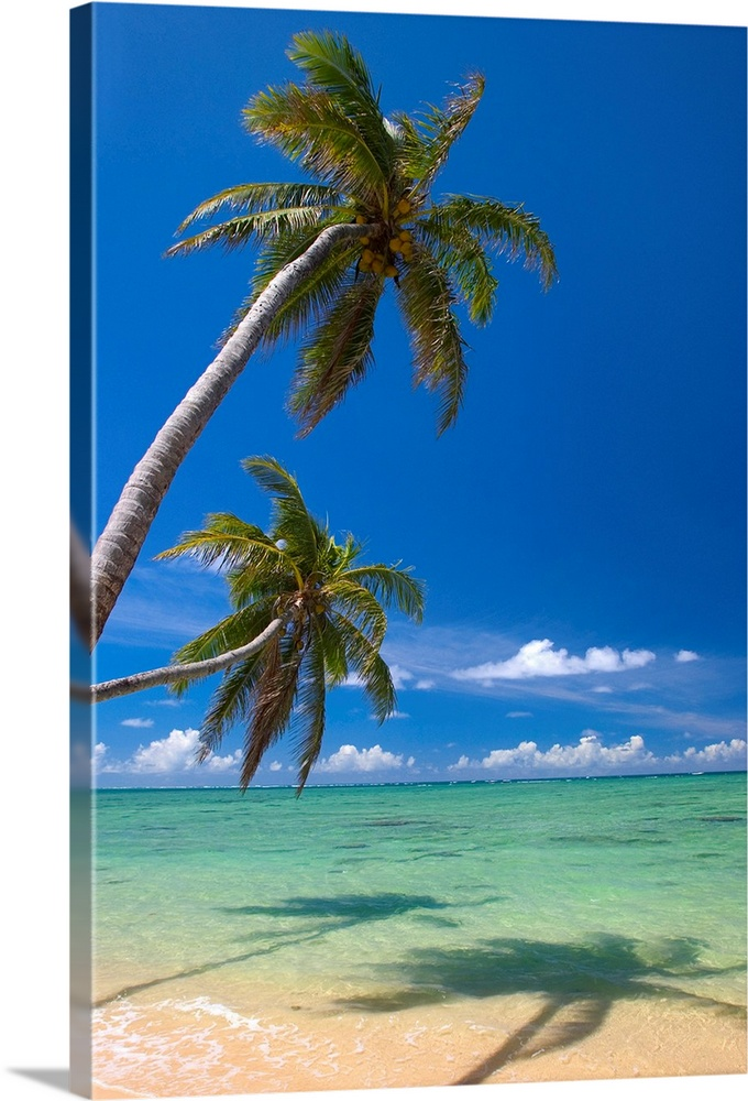 Large Solid-Faced Canvas Print Wall Art Print 20 x 30 entitled Palm Trees Lean And Cast Shadow On Beach With Turquoise Ocean Solid-Faced Canvas Print entitled Palm Trees Lean And Cast Shadow On Beach With Turquoise Ocean.  Multiple sizes available.  Primary colors within this image include Dark Yellow, White, Dark Forest Green, Royal Blue.  Made in USA.  All products come with a 365 day workmanship guarantee.  Inks used are latex-based and designed to last.  Canvas is handcrafted and made-to-order in the United States using high quality artist-grade canvas.  Canvas depth is 1.25 and includes a finished backing with pre-installed hanging hardware.