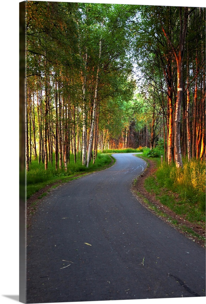 Large Solid-Faced Canvas Print Wall Art Print 20 x 30 entitled Paved path winding through the forest, Tony Knowles Coastal... Solid-Faced Canvas Print entitled Paved path winding through the forest, Tony Knowles Coastal Trail, Anchorage, Alaska.  Multiple sizes available.  Primary colors within this image include Light Yellow, Dark Gray, White, Dark Forest Green.  Made in the USA.  Satisfaction guaranteed.  Inks used are latex-based and designed to last.  Canvas depth is 1.25 and includes a finished backing with pre-installed hanging hardware.  Canvas is handcrafted and made-to-order in the United States using high quality artist-grade canvas.