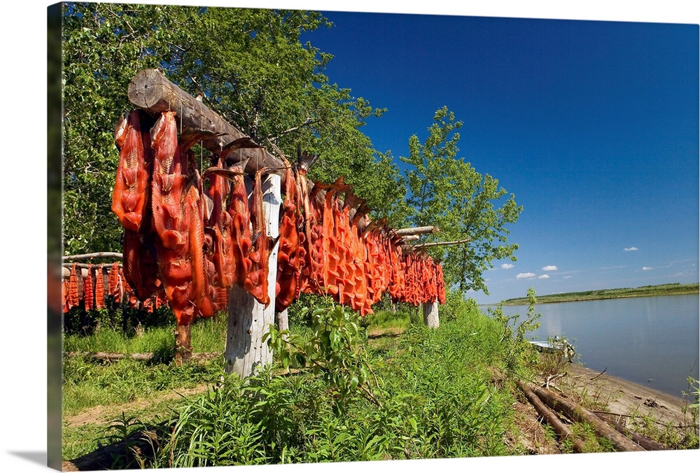 Large Solid-Faced Canvas Print Wall Art Print 30 x 20 entitled Red Salmon hang on drying rack along Kuskokwim River shoreline Solid-Faced Canvas Print entitled Red Salmon hang on drying rack along Kuskokwim River shoreline.  Red salmon hanging  on a drying rack with the Kuskokwim river in the background, Akiak Alaska.  Multiple sizes available.  Primary colors within this image include Dark Red, Black, Muted Blue, Dark Forest Green.  Made in USA.  All products come with a 365 day workmanship guarantee.  Inks used are latex-based and designed to last.  Canvas is handcrafted and made-to-order in the United States using high quality artist-grade canvas.  Canvas depth is 1.25 and includes a finished backing with pre-installed hanging hardware.