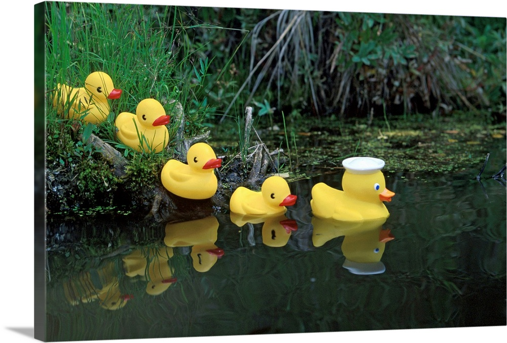 Large Solid-Faced Canvas Print Wall Art Print 30 x 20 entitled Rubber Ducks in a Row Pond Southcentral Alaska Solid-Faced Canvas Print entitled Rubber Ducks in a Row Pond Southcentral Alaska.  Multiple sizes available.  Primary colors within this image include Dark Yellow, Light Yellow, Black, Light Gray.  Made in the USA.  All products come with a 365 day workmanship guarantee.  Inks used are latex-based and designed to last.  Featuring a proprietary design, our canvases produce the tightest corners without any bubbles, ripples, or bumps and will not warp or sag over time.  Archival inks prevent fading and preserve as much fine detail as possible with no over-saturation or color shifting.
