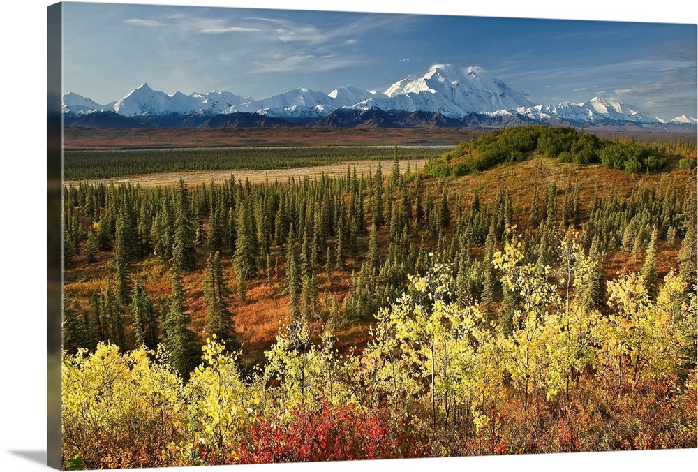 Large Solid-Faced Canvas Print Wall Art Print 30 x 20 entitled Scenic view of Mt. McKinley and the Alaska Range with taiga... Solid-Faced Canvas Print entitled Scenic view of Mt. McKinley and the Alaska Range with taiga and Fall colors.  A scenic photograph with taiga and fall colors in the foreground and a view of the Alaska Range, Denali, McKinley River in the background in the Wonder Lake area of Denali National Park, Alaska. .  Multiple sizes available.  Primary colors within this image include Dark Yellow, Peach, Dark Forest Green, Dark Navy Blue.  Made in USA.  All products come with a 365 day workmanship guarantee.  Inks used are latex-based and designed to last.  Canvas depth is 1.25 and includes a finished backing with pre-installed hanging hardware.  Canvas is handcrafted and made-to-order in the United States using high quality artist-grade canvas.