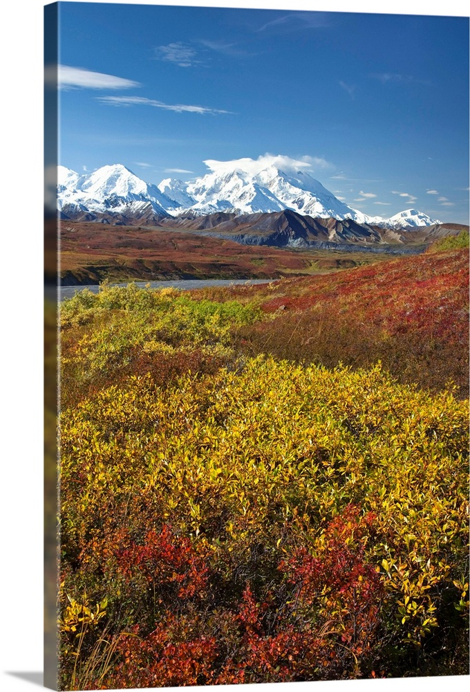 Large Solid-Faced Canvas Print Wall Art Print 20 x 30 entitled Scenic view of Mt.McKinley from Thorofare Pass with Autumn ... Solid-Faced Canvas Print entitled Scenic view of Mt.McKinley from Thorofare Pass with Autumn tundra, Denali National Park.  Multiple sizes available.  Primary colors within this image include Brown, Dark Yellow, Black, White.  Made in the USA.  Satisfaction guaranteed.  Inks used are latex-based and designed to last.  Archival inks prevent fading and preserve as much fine detail as possible with no over-saturation or color shifting.  Featuring a proprietary design, our canvases produce the tightest corners without any bubbles, ripples, or bumps and will not warp or sag over time.