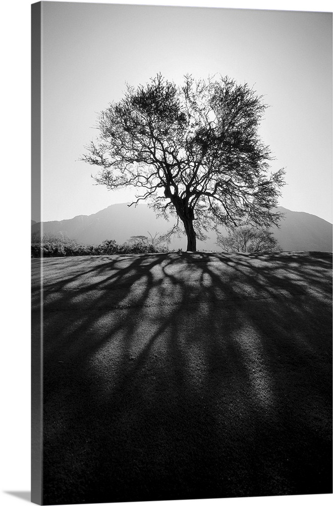 Large Solid-Faced Canvas Print Wall Art Print 20 x 30 entitled Silhouetted tree on grassy knoll, Shadows in foreground Solid-Faced Canvas Print entitled Silhouetted tree on grassy knoll, Shadows in foreground.  Multiple sizes available.  Primary colors within this image include Dark Gray, Silver.  Made in the USA.  Satisfaction guaranteed.  Inks used are latex-based and designed to last.  Featuring a proprietary design, our canvases produce the tightest corners without any bubbles, ripples, or bumps and will not warp or sag over time.  Canvas depth is 1.25 and includes a finished backing with pre-installed hanging hardware.