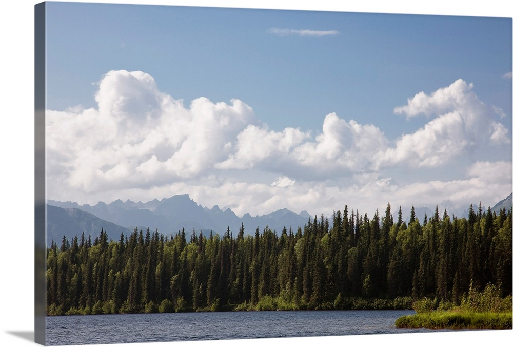 Large Solid-Faced Canvas Print Wall Art Print 30 x 20 entitled View of the Alaska Range from Byers Lake, Summer, Denali St... Solid-Faced Canvas Print entitled View of the Alaska Range from Byers Lake, Summer, Denali State Park, Southcentral Alaska.  Multiple sizes available.  Primary colors within this image include Dark Yellow, Black, Light Gray Blue.  Made in USA.  Satisfaction guaranteed.  Inks used are latex-based and designed to last.  Archival inks prevent fading and preserve as much fine detail as possible with no over-saturation or color shifting.  Featuring a proprietary design, our canvases produce the tightest corners without any bubbles, ripples, or bumps and will not warp or sag over time.