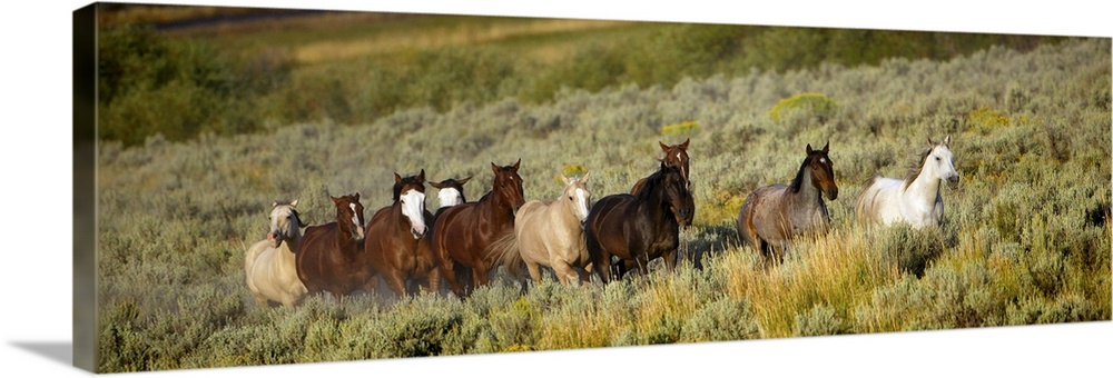 Canvas Kunst Drucken  Wild Horses