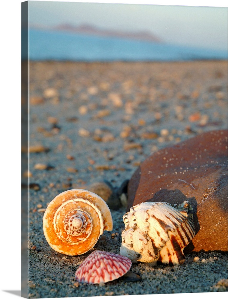 Large Solid-Faced Canvas Print Wall Art Print 30 x 40 entitled Beach Shells Solid-Faced Canvas Print entitled Beach Shells.  Photograph of three seashells, including a spiral shell and a clamshell, found on a sandy beach casting short shadows onto a stone. .  Multiple sizes available.  Primary colors within this image include Brown, Peach, Dark Gray, Silver.  Made in USA.  Satisfaction guaranteed.  Archival-quality UV-resistant inks.  Canvas depth is 1.25 and includes a finished backing with pre-installed hanging hardware.  Featuring a proprietary design, our canvases produce the tightest corners without any bubbles, ripples, or bumps and will not warp or sag over time.