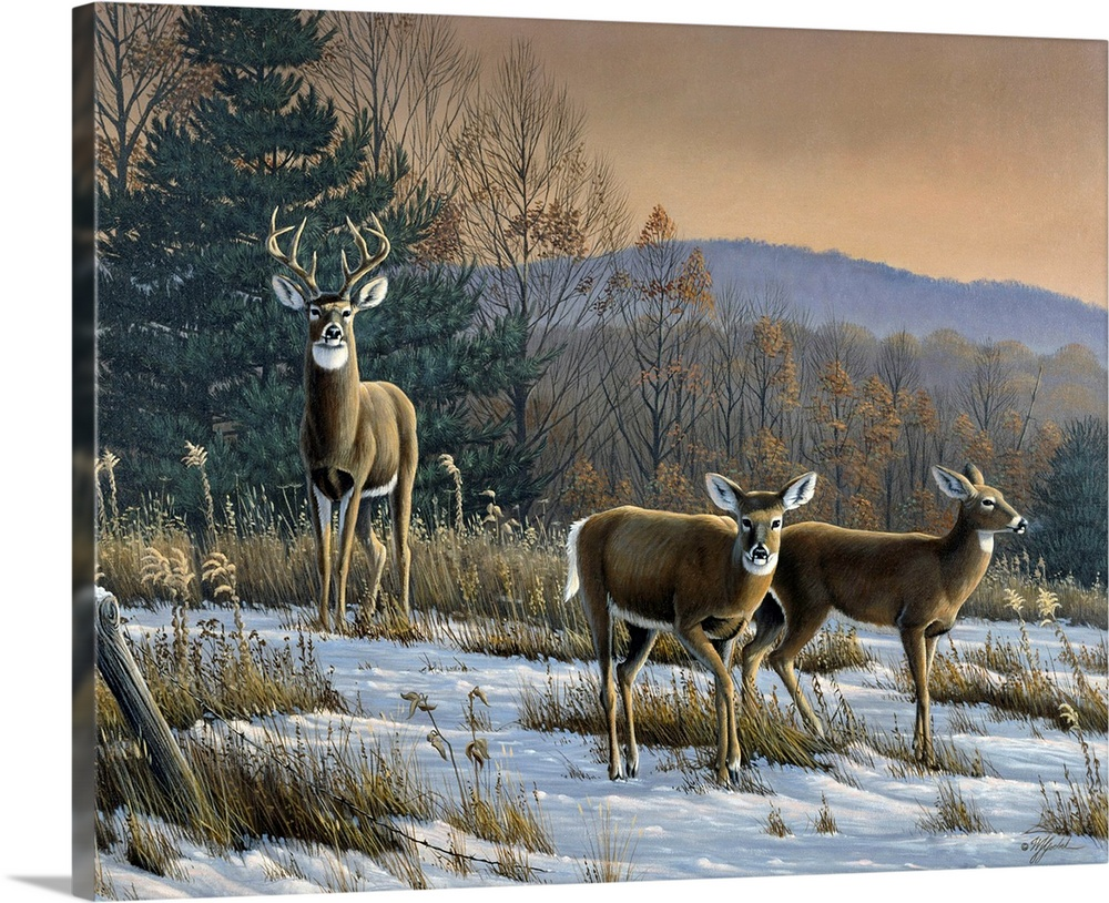 Large Solid-Faced Canvas Print Wall Art Print 30 x 24 entitled Prime Time - Whitetail Deer Solid-Faced Canvas Print entitled Prime Time - Whitetail Deer.  White tail deer in a field at sunset.  Multiple sizes available.  Primary colors within this image include Black, Light Gray.  Made in USA.  All products come with a 365 day workmanship guarantee.  Inks used are latex-based and designed to last.  Featuring a proprietary design, our canvases produce the tightest corners without any bubbles, ripples, or bumps and will not warp or sag over time.  Canvas depth is 1.25 and includes a finished backing with pre-installed hanging hardware.
