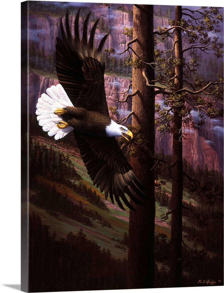 Large Solid-Faced Canvas Print Wall Art Print 36 x 48 entitled The Master Of Freedom Solid-Faced Canvas Print entitled The Master Of Freedom.  Eagle flying through the sky.  Multiple sizes available.  Primary colors within this image include Black, Gray, White.  Made in USA.  All products come with a 365 day workmanship guarantee.  Inks used are latex-based and designed to last.  Archival inks prevent fading and preserve as much fine detail as possible with no over-saturation or color shifting.  Featuring a proprietary design, our canvases produce the tightest corners without any bubbles, ripples, or bumps and will not warp or sag over time.