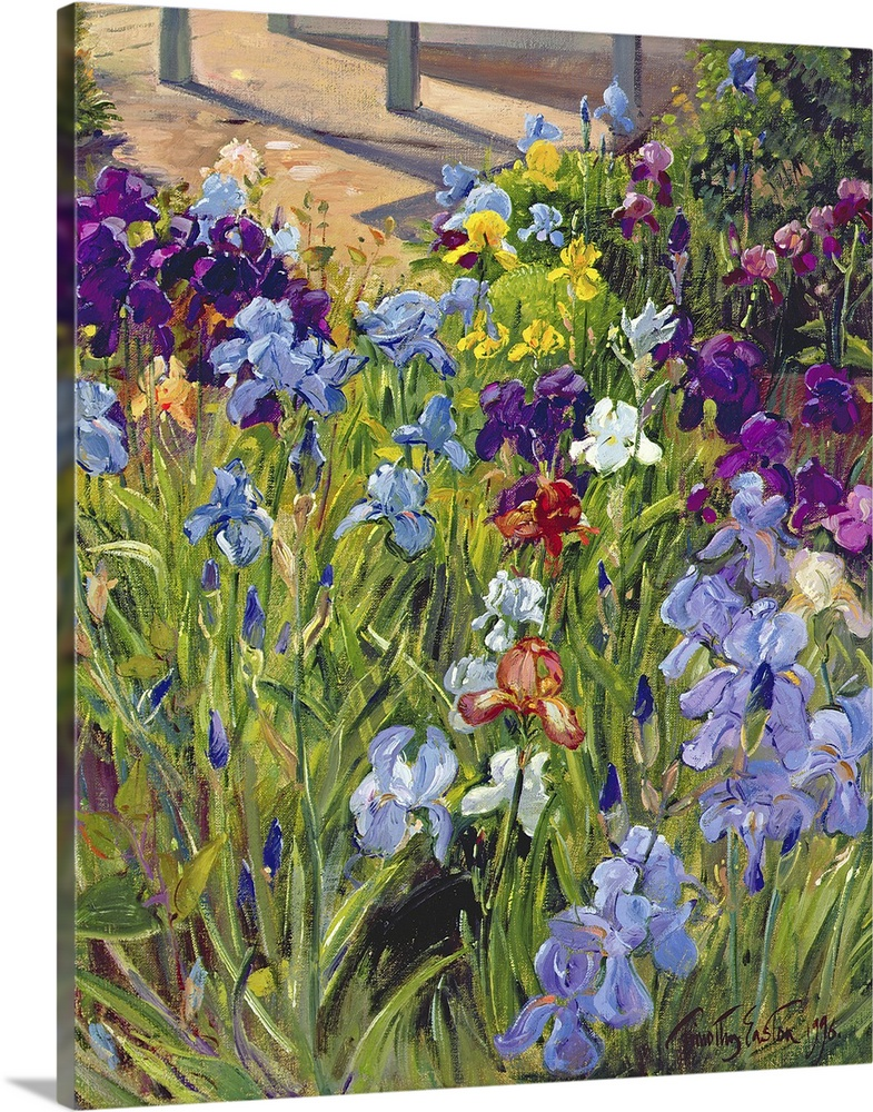 Large Solid-Faced Canvas Print Wall Art Print 24 x 30 entitled Irises and Summer House Shadows, 1996 Solid-Faced Canvas Print entitled Irises and Summer House Shadows, 1996.  Oil painting by Timothy Easton featuring colorful iris flowers blooming in a garden.  Multiple sizes available.  Primary colors within this image include Dark Purple, Light Yellow, Black, White.  Made in the USA.  Satisfaction guaranteed.  Inks used are latex-based and designed to last.  Canvas depth is 1.25 and includes a finished backing with pre-installed hanging hardware.  Canvas is handcrafted and made-to-order in the United States using high quality artist-grade canvas.