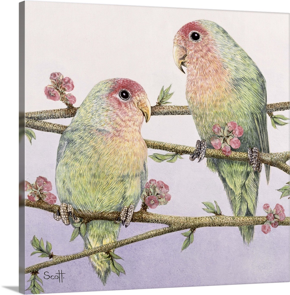 Large Solid-Faced Canvas Print Wall Art Print 20 x 20 entitled Love Birds Solid-Faced Canvas Print entitled Love Birds.  Multiple sizes available.  Primary colors within this image include Black, Gray, White.  Made in the USA.  Satisfaction guaranteed.  Inks used are latex-based and designed to last.  Archival inks prevent fading and preserve as much fine detail as possible with no over-saturation or color shifting.  Canvas is handcrafted and made-to-order in the United States using high quality artist-grade canvas.
