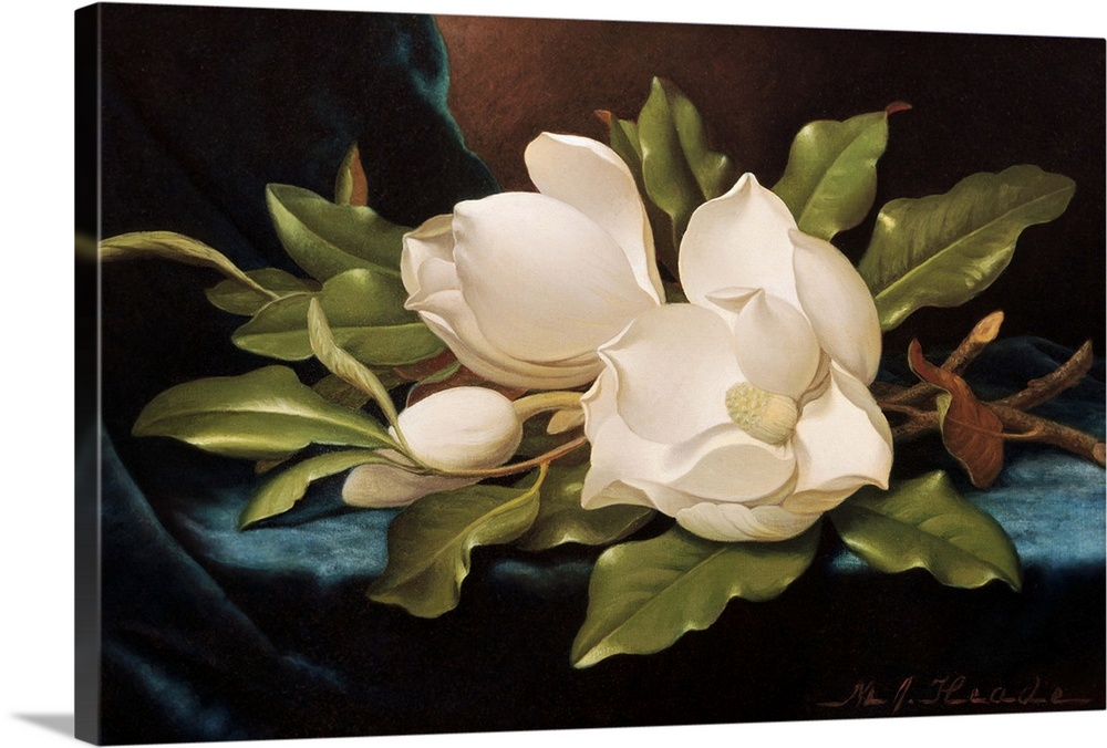 Large Gallery-Wrapped Canvas Wall Art Print 24 x 15 entitled Giant Magnolias On Blue Cloth By Martin Johnson Heade Gallery-Wrapped Canvas entitled Giant Magnolias On Blue Cloth By Martin Johnson Heade.  Multiple sizes available.  Primary colors within this image include Brown, Black, Silver, Gray Blue.  Made in USA.  Satisfaction guaranteed.  Inks used are latex-based and designed to last.  Canvases have a UVB protection built in to protect against fading and moisture and are designed to last for over 100 years.  Canvas frames are built with farmed or reclaimed domestic pine or poplar wood.