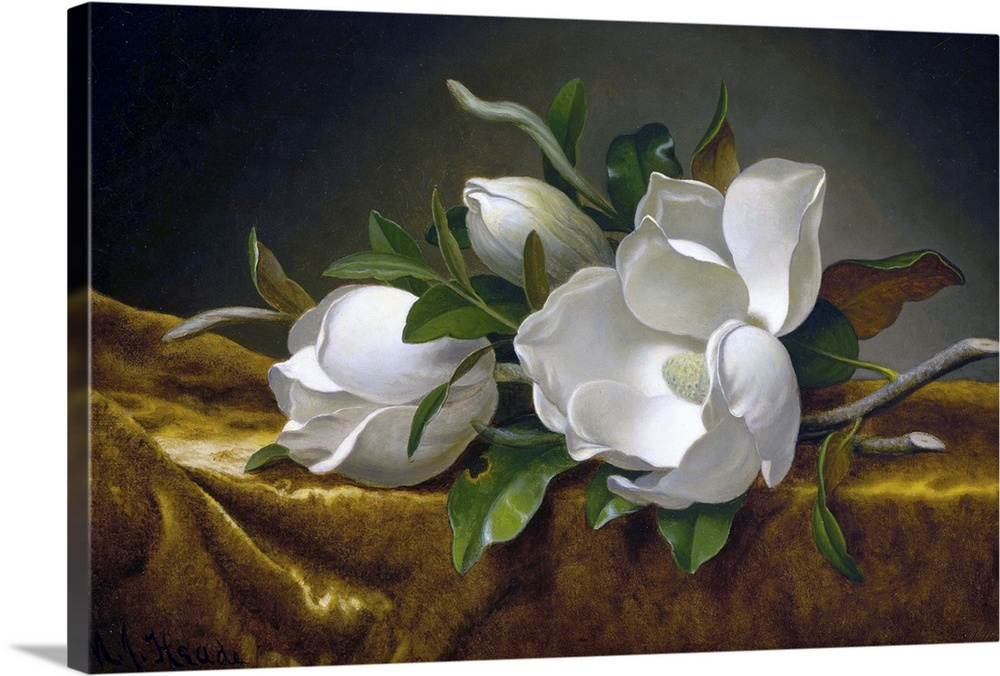 Large Gallery-Wrapped Canvas Wall Art Print 24 x 15 entitled Magnolias On Gold Velvet Cloth By Martin Johnson Heade Gallery-Wrapped Canvas entitled Magnolias On Gold Velvet Cloth By Martin Johnson Heade.  Martin Johnson Heade American, 1819-1904, Magnolias on Gold Velvet Cloth, c. 1888-90, oil on canvas, 37.6 x 60.9 cm 14.8 x 24 in, Museum of Fine Arts, Houston.  Multiple sizes available.  Primary colors within this image include Brown, Black, Light Gray.  Made in the USA.  All products come with a 365 day workmanship guarantee.  Inks used are latex-based and designed to last.  Canvas frames are built with farmed or reclaimed domestic pine or poplar wood.  Canvases are stretched across a 1.5 inch thick wooden frame with easy-to-mount hanging hardware.