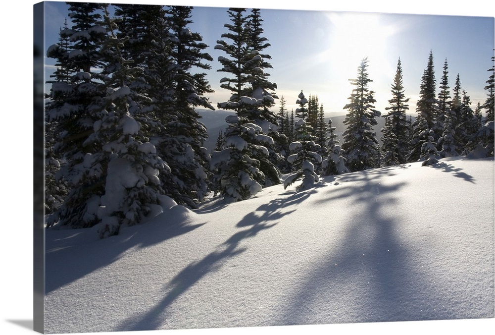 Large Solid-Faced Canvas Print Wall Art Print 30 x 20 entitled British Columbia, Smithers, Snow-laden spruce trees cast sh... Solid-Faced Canvas Print entitled British Columbia, Smithers, Snow-laden spruce trees cast shadows across sunlit snow.  Canada, British Columbia, Smithers. Snow-laden spruce trees cast shadows across sunlit snow. Credit as Bill Young  Jaynes Gallery  DanitaDelimont.com.  Multiple sizes available.  Primary colors within this image include Black, Gray, White.  Made in USA.  Satisfaction guaranteed.  Archival-quality UV-resistant inks.  Archival inks prevent fading and preserve as much fine detail as possible with no over-saturation or color shifting.  Canvas depth is 1.25 and includes a finished backing with pre-installed hanging hardware.