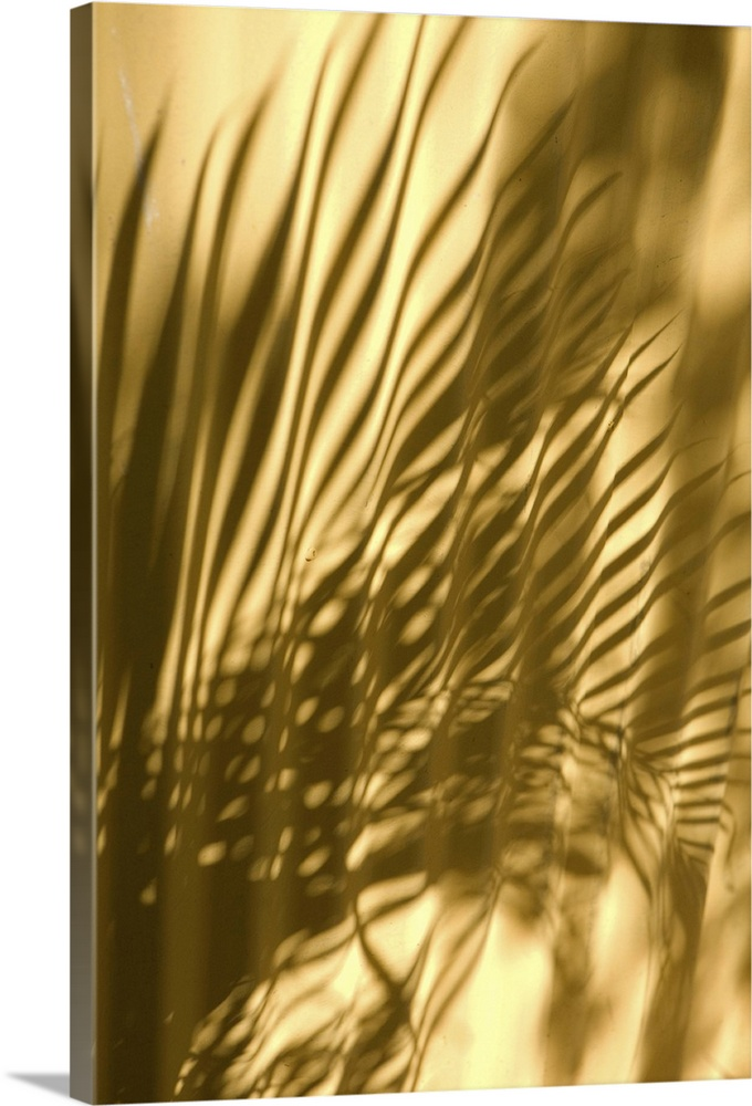 Large Solid-Faced Canvas Print Wall Art Print 20 x 30 entitled Caribbean, Puerto Rico, Old San Juan. Shadow of palm frond ... Solid-Faced Canvas Print entitled Caribbean, Puerto Rico, Old San Juan. Shadow of palm frond on wall.  Caribbean, Puerto Rico, Old San Juan.  Shadow of palm frond on wall.  Multiple sizes available.  Primary colors within this image include Brown, Light Yellow, Black.  Made in USA.  All products come with a 365 day workmanship guarantee.  Inks used are latex-based and designed to last.  Canvas depth is 1.25 and includes a finished backing with pre-installed hanging hardware.  Featuring a proprietary design, our canvases produce the tightest corners without any bubbles, ripples, or bumps and will not warp or sag over time.