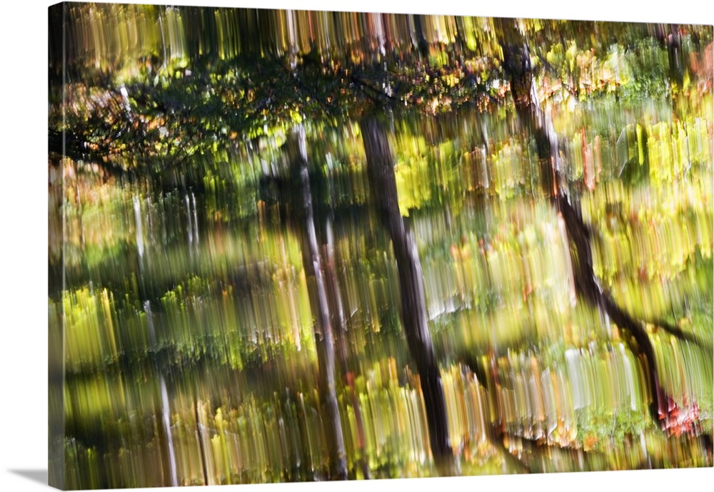 Solid-Faced Canvas drucken wand kunst entitled Reflections in mountain stream,