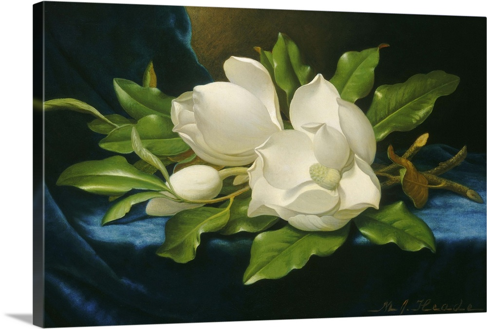 Large Solid-Faced Canvas Print Wall Art Print 30 x 20 entitled Giant Magnolias on a Blue Velvet Cloth, by Martin Johnson H... Solid-Faced Canvas Print entitled Giant Magnolias on a Blue Velvet Cloth, by Martin Johnson Heade, 1890.  Giant Magnolias on a Blue Velvet Cloth, by Martin Johnson Heade, 1890, American oil painting. Landscape and flower painter Heade moved to Florida in his late career, when he painted this work. Railroad magnate Henry Morrison Flagler, regularly purchased h.  Multiple sizes available.  Primary colors within this image include Forest Green, Black, White, Gray Blue.  Made in the USA.  All products come with a 365 day workmanship guarantee.  Inks used are latex-based and designed to last.  Featuring a proprietary design, our canvases produce the tightest corners without any bubbles, ripples, or bumps and will not warp or sag over time.  Canvas is handcrafted and made-to-order in the United States using high quality artist-grade canvas.