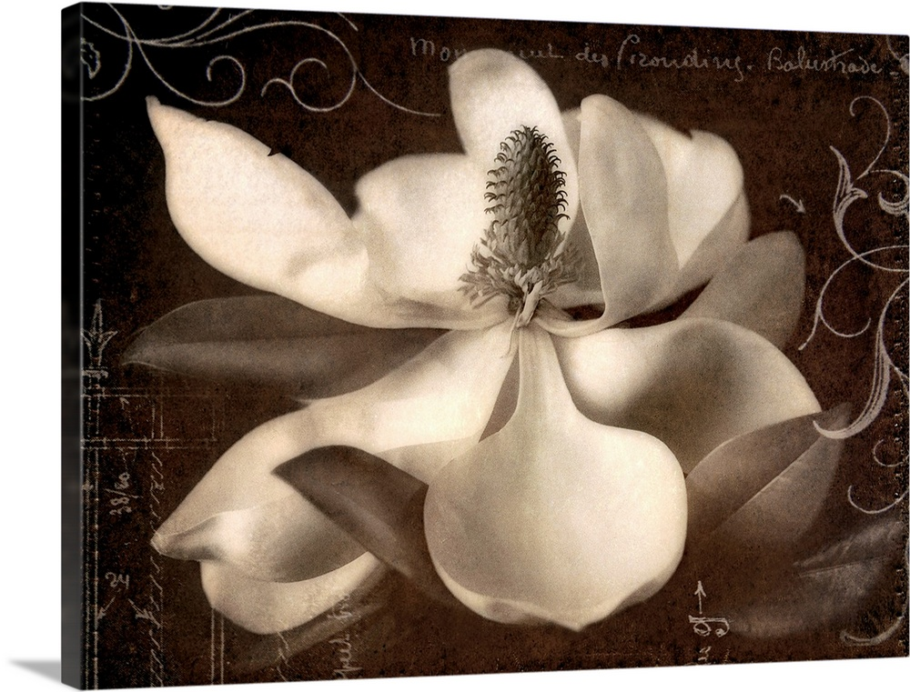 Large Solid-Faced Canvas Print Wall Art Print 40 x 30 entitled Garden Journal I Solid-Faced Canvas Print entitled Garden Journal I.  This decorative accent is a collage created with decorative embellishments laid over a magnolia blossom.  Multiple sizes available.  Primary colors within this image include Black, Gray, White.  Made in the USA.  Satisfaction guaranteed.  Inks used are latex-based and designed to last.  Archival inks prevent fading and preserve as much fine detail as possible with no over-saturation or color shifting.  Featuring a proprietary design, our canvases produce the tightest corners without any bubbles, ripples, or bumps and will not warp or sag over time.