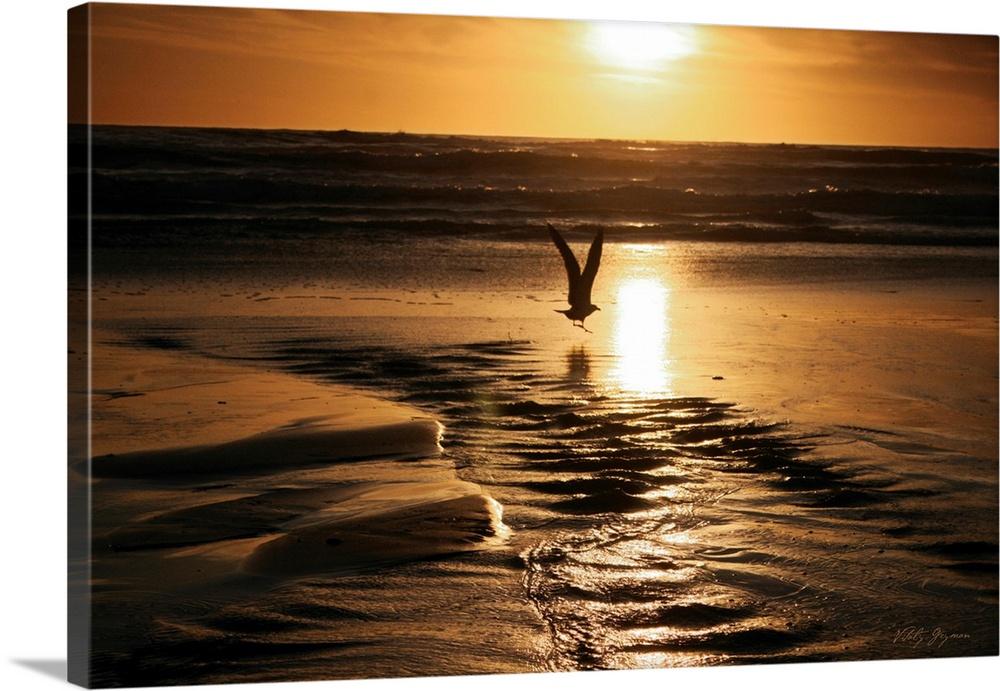 Sunset Bird  Canvas Art Print