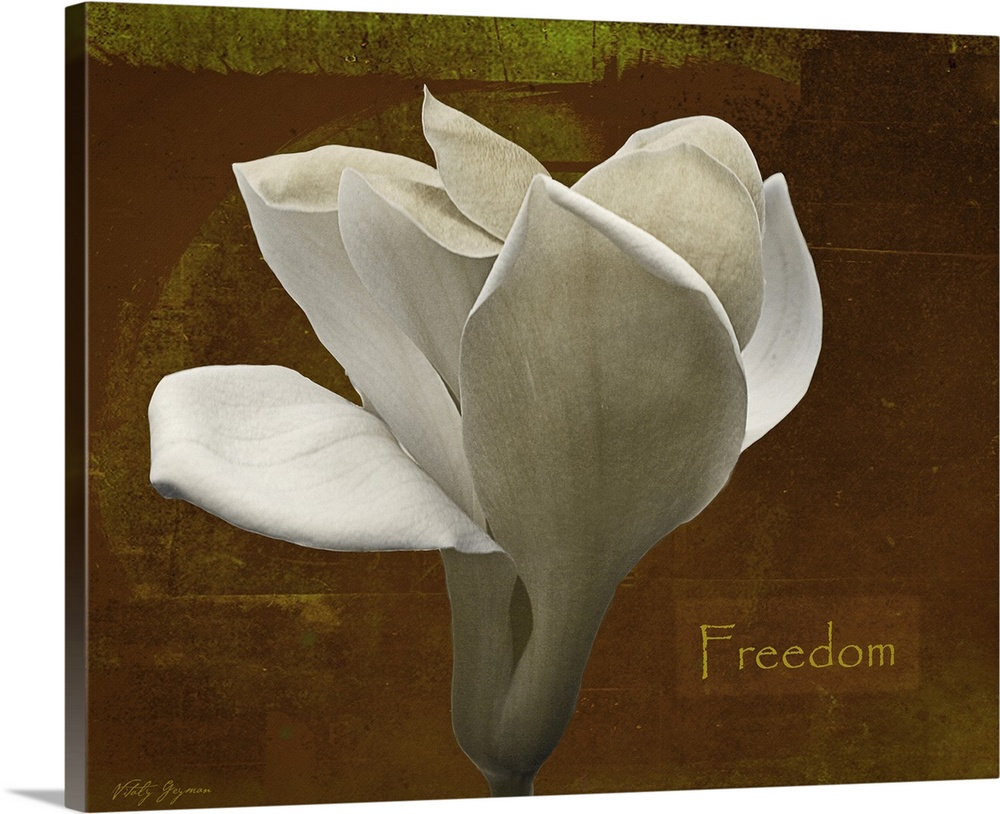 Large Solid-Faced Canvas Print Wall Art Print 45 x 36 entitled Zen Tulip Freedom Solid-Faced Canvas Print entitled Zen Tulip Freedom.  Docor perfect for the home of a large white tulip against a distressed brown background with the text Freedom written to the side.  Multiple sizes available.  Primary colors within this image include Light Gray, Dark Forest Green.  Made in USA.  All products come with a 365 day workmanship guarantee.  Archival-quality UV-resistant inks.  Featuring a proprietary design, our canvases produce the tightest corners without any bubbles, ripples, or bumps and will not warp or sag over time.  Canvas depth is 1.25 and includes a finished backing with pre-installed hanging hardware.