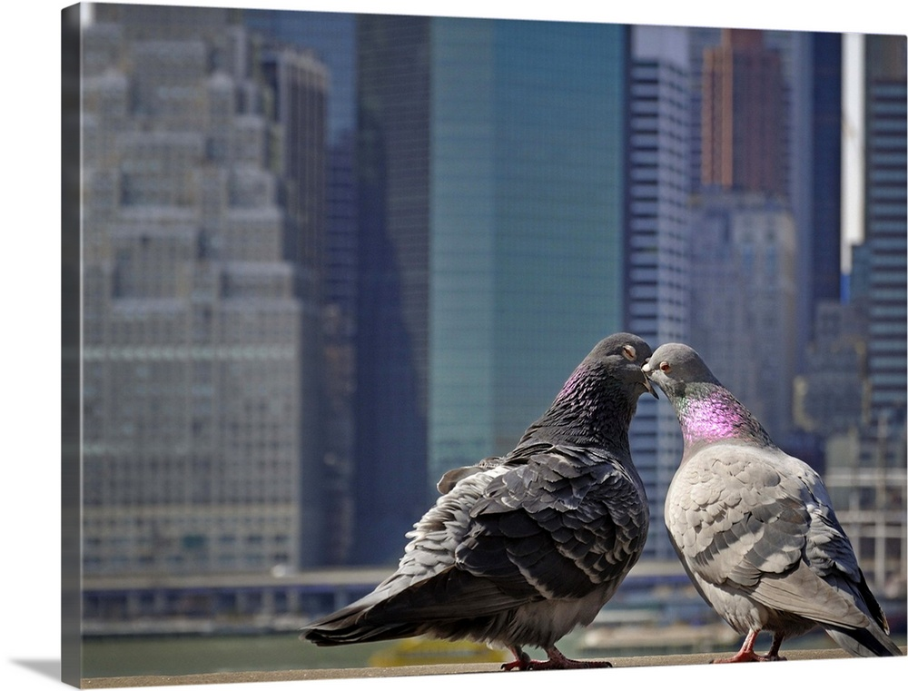 Large Solid-Faced Canvas Print Wall Art Print 40 x 30 entitled Ah, To Be Young and in Love in NYC Solid-Faced Canvas Print entitled Ah, To Be Young and in Love in NYC.  Amorous pigeon couple kiss overlooking lower Manhattan at the Brooklyn Heights Promenade It started with just a kiss ...  Multiple sizes available.  Primary colors within this image include Black, Silver, Gray Blue.  Made in USA.  Satisfaction guaranteed.  Archival-quality UV-resistant inks.  Canvas depth is 1.25 and includes a finished backing with pre-installed hanging hardware.  Canvas is handcrafted and made-to-order in the United States using high quality artist-grade canvas.