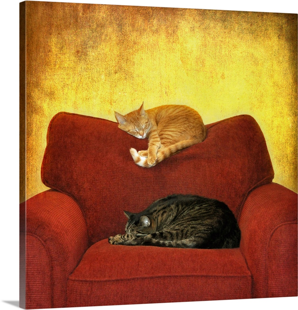 Large Solid-Faced Canvas Print Wall Art Print 20 x 20 entitled Cats sleeping on sofa. Solid-Faced Canvas Print entitled Cats sleeping on sofa..  Multiple sizes available.  Primary colors within this image include Dark Red, Light Yellow, Black, Gray.  Made in the USA.  Satisfaction guaranteed.  Archival-quality UV-resistant inks.  Featuring a proprietary design, our canvases produce the tightest corners without any bubbles, ripples, or bumps and will not warp or sag over time.  Canvas is handcrafted and made-to-order in the United States using high quality artist-grade canvas.