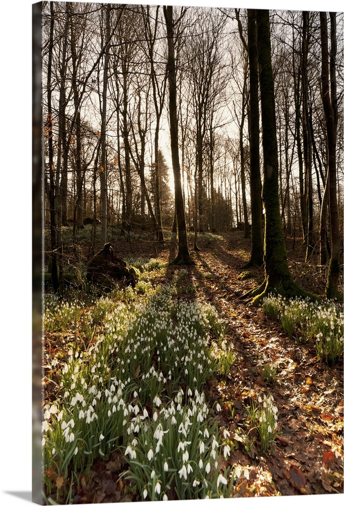 Solid-Faced Canvas Print Wall Art entitled Flowerbed in a forest, Dumfries,