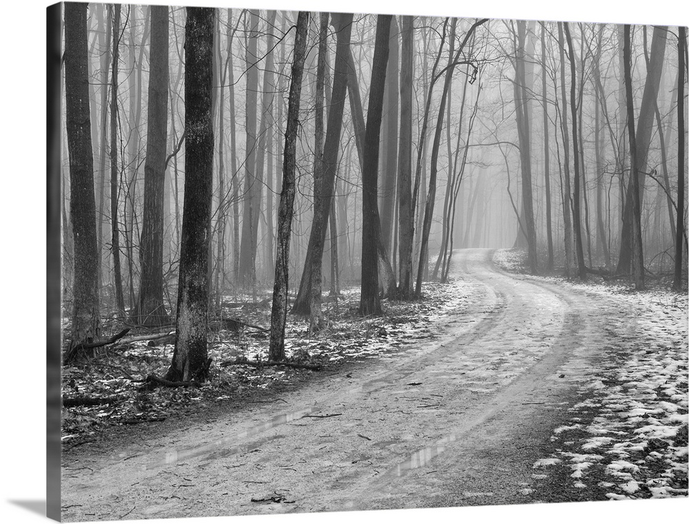 Solid-Faced Canvas Print Wall Art entitled Foggy morning, late winter in Wright