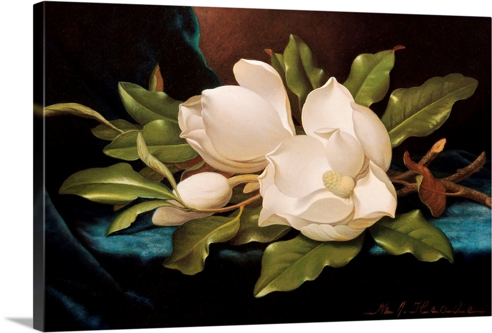 Large Solid-Faced Canvas Print Wall Art Print 30 x 20 entitled Giant Magnolias On Blue Cloth By Martin Johnson Heade Solid-Faced Canvas Print entitled Giant Magnolias On Blue Cloth By Martin Johnson Heade.  Multiple sizes available.  Primary colors within this image include Dark Yellow, Black, White, Teal.  Made in USA.  Satisfaction guaranteed.  Archival-quality UV-resistant inks.  Archival inks prevent fading and preserve as much fine detail as possible with no over-saturation or color shifting.  Canvas depth is 1.25 and includes a finished backing with pre-installed hanging hardware.