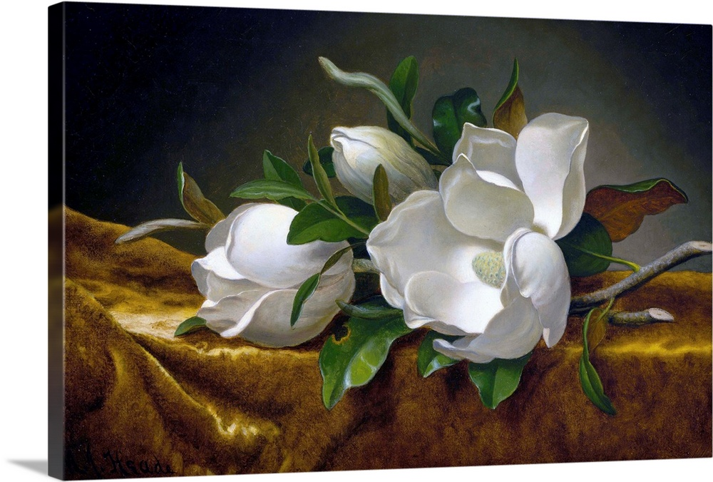 Large Solid-Faced Canvas Print Wall Art Print 30 x 20 entitled Magnolias On Gold Velvet Cloth By Martin Johnson Heade Solid-Faced Canvas Print entitled Magnolias On Gold Velvet Cloth By Martin Johnson Heade.  Martin Johnson Heade American, 1819-1904, Magnolias on Gold Velvet Cloth, c. 1888-90, oil on canvas, 37.6 x 60.9 cm 14.8 x 24 in, Museum of Fine Arts, Houston.  Multiple sizes available.  Primary colors within this image include Brown, Dark Yellow, Black, White.  Made in USA.  All products come with a 365 day workmanship guarantee.  Inks used are latex-based and designed to last.  Canvas depth is 1.25 and includes a finished backing with pre-installed hanging hardware.  Featuring a proprietary design, our canvases produce the tightest corners without any bubbles, ripples, or bumps and will not warp or sag over time.