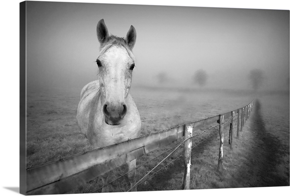 Large Gallery-Wrapped Canvas Wall Art Print 24 x 16 entitled Portrait horse standing at fence with fog. Gallery-Wrapped Canvas entitled Portrait horse standing at fence with fog..  Landscape photograph of a horse standing behind a fence as he looks at the camera surrounded by a thick fog over a vast field.  Multiple sizes available.  Primary colors within this image include Dark Gray Light Gray.  Made in the USA.  Satisfaction guaranteed.  Inks used are latex-based and designed to last.  Canvas is acid-free and 20 millimeters thick.  Canvases have a UVB protection built in to protect against fading and moisture and are designed to last for over 100 years.