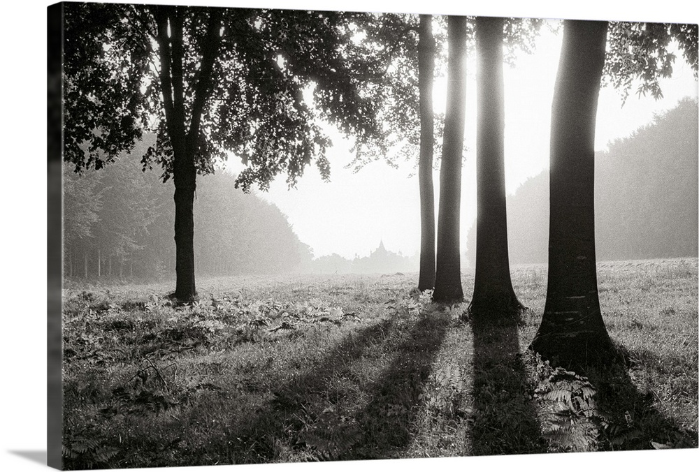 Large Solid-Faced Canvas Print Wall Art Print 30 x 20 entitled Trees casting shadows, Egypt Solid-Faced Canvas Print entitled Trees casting shadows, Egypt.  SOUS-BOIS, TREES, CASTLE, SHADOWS, BACKLIGHT, BRUMES SUN PHOTO BLACK AND WHITE, FRANCE.  Multiple sizes available.  Primary colors within this image include Black, Gray, White.  Made in USA.  All products come with a 365 day workmanship guarantee.  Inks used are latex-based and designed to last.  Canvas depth is 1.25 and includes a finished backing with pre-installed hanging hardware.  Archival inks prevent fading and preserve as much fine detail as possible with no over-saturation or color shifting.