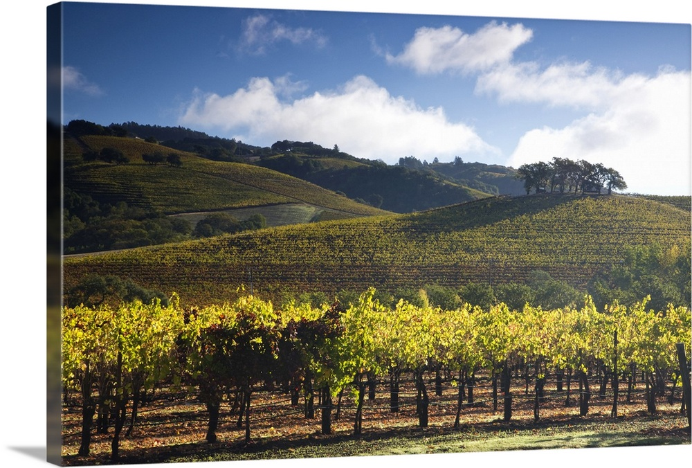 Large Solid-Faced Canvas Print Wall Art Print 30 x 20 entitled Vineyards Autumn time in Sonoma Valley Solid-Faced Canvas Print entitled Vineyards Autumn time in Sonoma Valley.  Multiple sizes available.  Primary colors within this image include Dark Yellow, Peach, Light Yellow, Black.  Made in USA.  Satisfaction guaranteed.  Archival-quality UV-resistant inks.  Archival inks prevent fading and preserve as much fine detail as possible with no over-saturation or color shifting.  Canvas depth is 1.25 and includes a finished backing with pre-installed hanging hardware.
