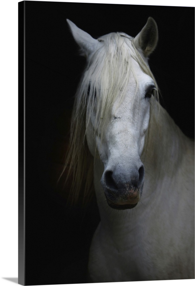 Large Solid-Faced Canvas Print Wall Art Print 20 x 30 entitled White horse in shadow Solid-Faced Canvas Print entitled White horse in shadow.  Multiple sizes available.  Primary colors within this image include Black, Gray.  Made in the USA.  All products come with a 365 day workmanship guarantee.  Inks used are latex-based and designed to last.  Canvas depth is 1.25 and includes a finished backing with pre-installed hanging hardware.  Archival inks prevent fading and preserve as much fine detail as possible with no over-saturation or color shifting.