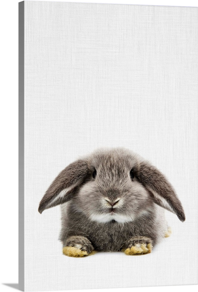 Solid-Faced Canvas Print Wall Art entitled Rabbit II