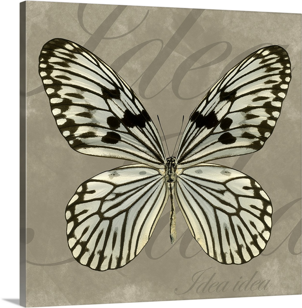 Large Gallery-Wrapped Canvas Wall Art Print 16 x 16 entitled Rice Paper Gallery-Wrapped Canvas entitled Rice Paper.  Artwork of a butterfly with the text Idea Idea in large and small fonts in the background. .  Multiple sizes available.  Primary colors within this image include Light Gray White Dark Forest Green.  Made in USA.  All products come with a 365 day workmanship guarantee.  Archival-quality UV-resistant inks.  Canvas frames are built with farmed or reclaimed domestic pine or poplar wood.  Canvases have a UVB protection built in to protect against fading and moisture and are designed to last for over 100 years.