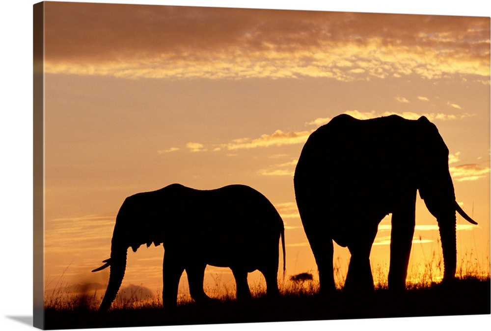 Large Gallery-Wrapped Canvas Wall Art Print 24 x 16 entitled African Elephant (Loxodonta africana) mother and calf silhoue... Gallery-Wrapped Canvas entitled African Elephant Loxodonta africana mother and calf silhouetted at sunset Kenya.  Multiple sizes available.  Primary colors within this image include Brown Peach Dark Gray.  Made in the USA.  All products come with a 365 day workmanship guarantee.  Archival-quality UV-resistant inks.  Canvas is acid-free and 20 millimeters thick.  Canvas is designed to prevent fading.