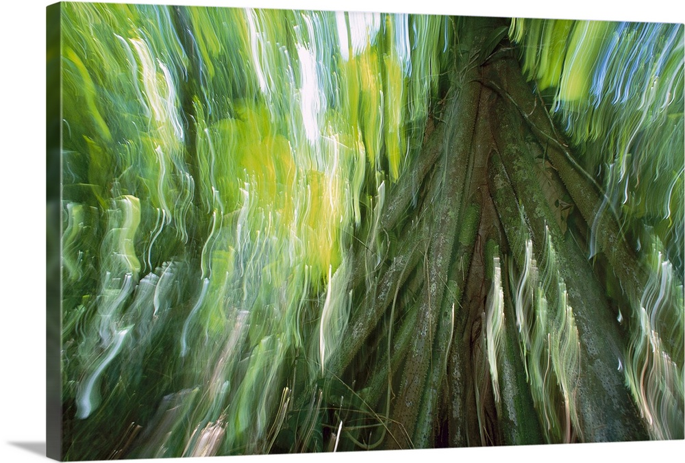 Large Gallery-Wrapped Canvas Wall Art Print 24 x 16 entitled Walking Palm showing stilt roots, with abstract rainforest pa... Gallery-Wrapped Canvas entitled Walking Palm showing stilt roots with abstract rainforest patterns.  Abstract photograph looking up a large tree with the light hitting the green leaves as the camera is moved to create streaks in the sky.  Multiple sizes available.  Primary colors within this image include Dark Yellow Light Green Dark Forest Green Gray Blue.  Made in USA.  Satisfaction guaranteed.  Inks used are latex-based and designed to last.  Canvas is acid-free and 20 millimeters thick.  Canvases have a UVB protection built in to protect against fading and moisture and are designed to last for over 100 years.