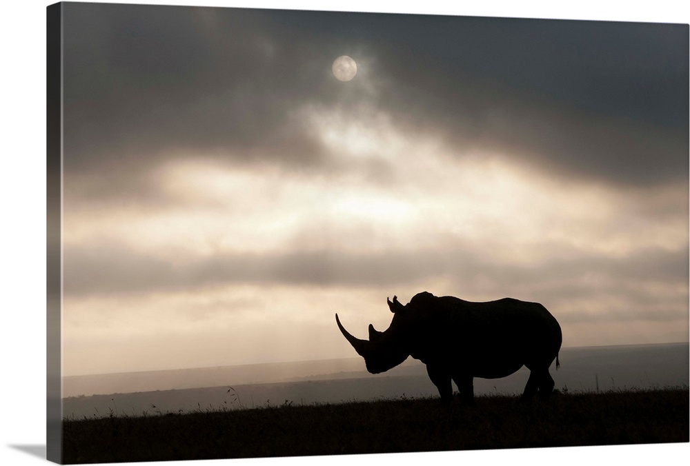 Large Gallery-Wrapped Canvas Wall Art Print 24 x 16 entitled White Rhinoceros at sunset, Solio Game Reserve, Kenya Gallery-Wrapped Canvas entitled White Rhinoceros at sunset, Solio Game Reserve, Kenya.  Multiple sizes available.  Primary colors within this image include Black, Gray, White.  Made in USA.  Satisfaction guaranteed.  Inks used are latex-based and designed to last.  Canvas frames are built with farmed or reclaimed domestic pine or poplar wood.  Canvas is designed to prevent fading.