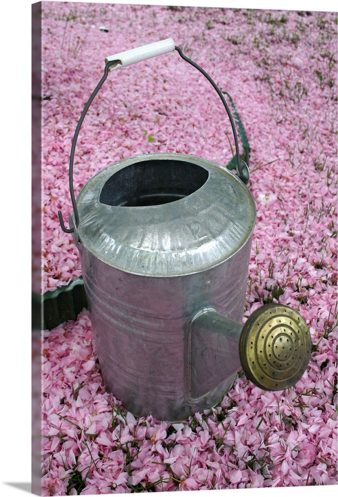 Large Solid-Faced Canvas Print Wall Art Print 20 x 30 entitled A garden watering can on a pink sea of fallen cherry blossoms Solid-Faced Canvas Print entitled A garden watering can on a pink sea of fallen cherry blossoms.  Gaithersburg, Maryland.  Multiple sizes available.  Primary colors within this image include Plum, Black, Light Gray.  Made in USA.  Satisfaction guaranteed.  Inks used are latex-based and designed to last.  Featuring a proprietary design, our canvases produce the tightest corners without any bubbles, ripples, or bumps and will not warp or sag over time.  Canvas is handcrafted and made-to-order in the United States using high quality artist-grade canvas.