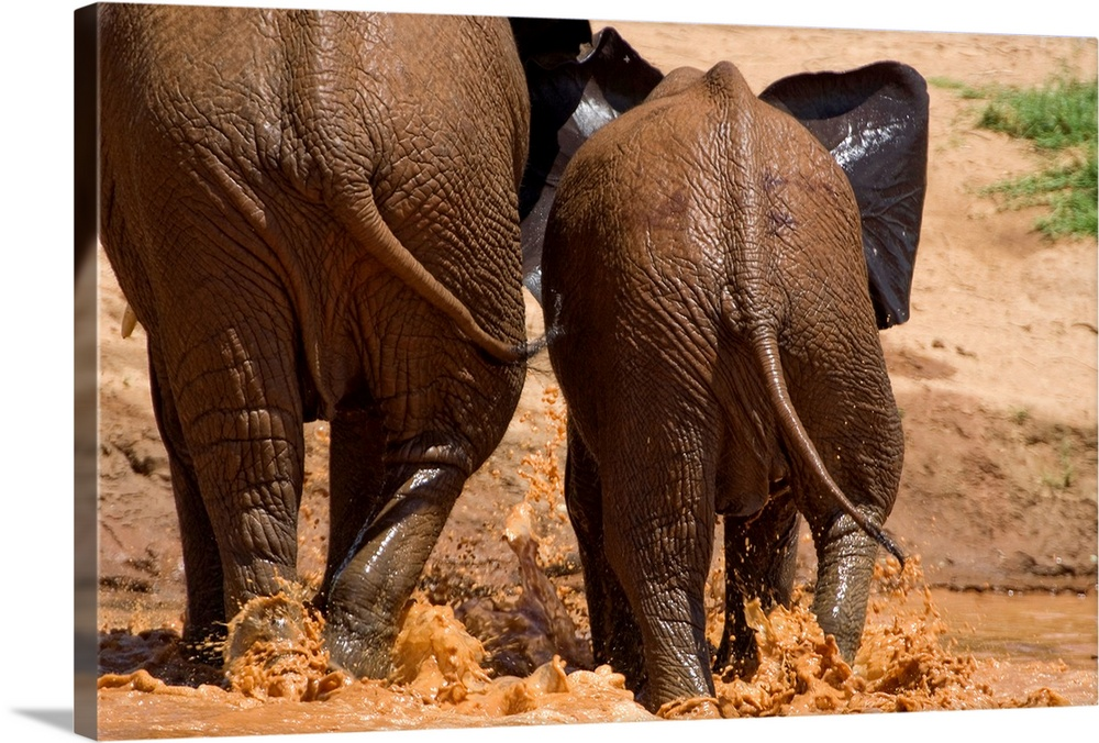 Large Gallery-Wrapped Canvas Wall Art Print 24 x 16 entitled Mother and baby elephants at a river crossing, Samburu Nation... Gallery-Wrapped Canvas entitled Mother and baby elephants at a river crossing Samburu National Reserve Kenya.  Multiple sizes available.  Primary colors within this image include Black Light Gray.  Made in USA.  Satisfaction guaranteed.  Archival-quality UV-resistant inks.  Canvas frames are built with farmed or reclaimed domestic pine or poplar wood.  Museum-quality artist-grade canvas mounted on sturdy wooden stretcher bars 1.5 thick.  Comes ready to hang.