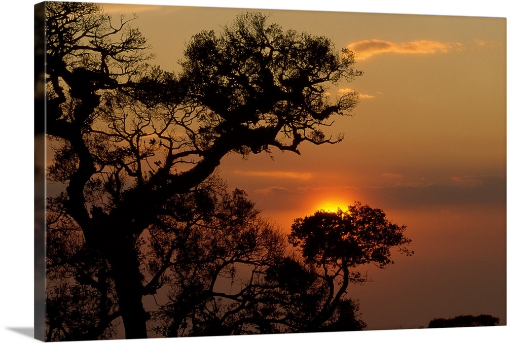 Large Solid-Faced Canvas Print Wall Art Print 30 x 20 entitled Quiet Time Solid-Faced Canvas Print entitled Quiet Time.  Big, landscape photograph of the sunset silhouetting trees in the foreground, in Monteverde Cloud Forest Reserve, Costa Rica.  Multiple sizes available.  Primary colors within this image include Orange, Brown, Peach, Black.  Made in the USA.  All products come with a 365 day workmanship guarantee.  Inks used are latex-based and designed to last.  Canvas depth is 1.25 and includes a finished backing with pre-installed hanging hardware.  Canvas is handcrafted and made-to-order in the United States using high quality artist-grade canvas.