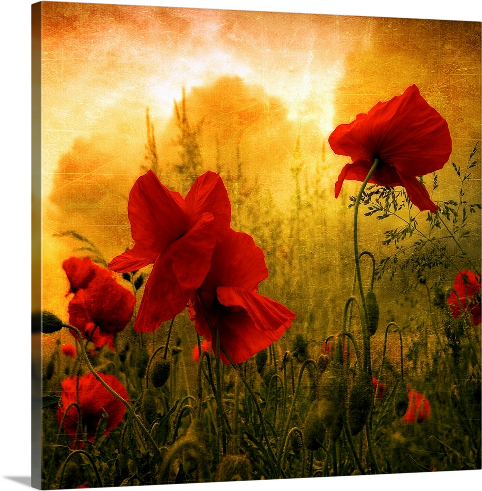 Large Solid-Faced Canvas Print Wall Art Print 20 x 20 entitled Red for Love Solid-Faced Canvas Print entitled Red for Love.  Giant square photograph composed of a close-up shot of colorful flowers near a forest.  Multiple sizes available.  Primary colors within this image include Dark Red, Brown, Black, White.  Made in the USA.  All products come with a 365 day workmanship guarantee.  Inks used are latex-based and designed to last.  Canvas is handcrafted and made-to-order in the United States using high quality artist-grade canvas.  Canvas depth is 1.25 and includes a finished backing with pre-installed hanging hardware.