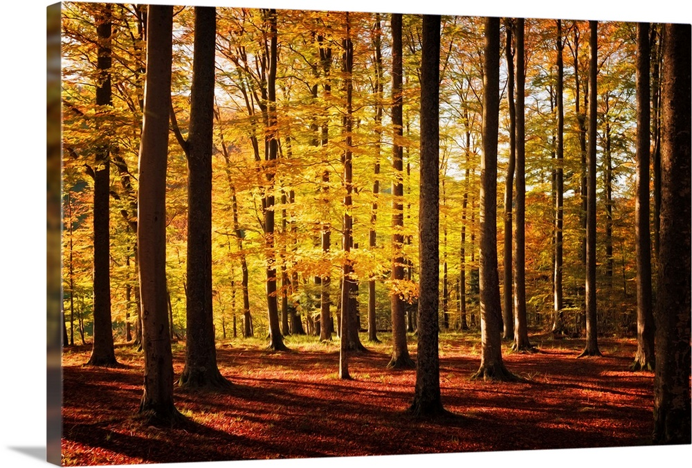 Large Solid-Faced Canvas Print Wall Art Print 30 x 20 entitled Walk Between Trees Solid-Faced Canvas Print entitled Walk Between Trees.  Fine art photo of a forest of narrow trees casting long shadows in autumn.  Multiple sizes available.  Primary colors within this image include Brown, Peach, Black, White.  Made in USA.  All products come with a 365 day workmanship guarantee.  Archival-quality UV-resistant inks.  Canvas depth is 1.25 and includes a finished backing with pre-installed hanging hardware.  Canvas is handcrafted and made-to-order in the United States using high quality artist-grade canvas.