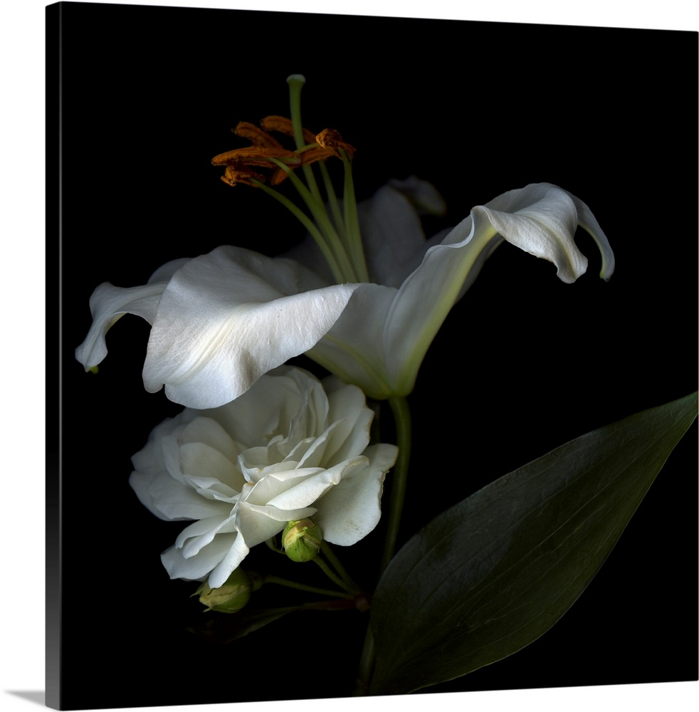Large Solid-Faced Canvas Print Wall Art Print 20 x 20 entitled White Rose and White Lily Solid-Faced Canvas Print entitled White Rose and White Lily.  Two white flowers are shadowed but stand out against a dark background.  Multiple sizes available.  Primary colors within this image include Black, Gray, Silver.  Made in the USA.  All products come with a 365 day workmanship guarantee.  Archival-quality UV-resistant inks.  Archival inks prevent fading and preserve as much fine detail as possible with no over-saturation or color shifting.  Featuring a proprietary design, our canvases produce the tightest corners without any bubbles, ripples, or bumps and will not warp or sag over time.