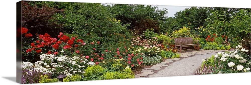 Large Solid-Faced Canvas Print Wall Art Print 48 x 16 entitled Bench in a garden, Olbrich Botanical Gardens, Madison, Wisc... Solid-Faced Canvas Print entitled Bench in a garden, Olbrich Botanical Gardens, Madison, Wisconsin.  Landscape, oversized photograph of a stone path leading toward a wooden bench as it curves through flowers and foliage of the Olbrich Botanical Gardens in Madison, Wisconsin.  Multiple sizes available.  Primary colors within this image include Dark Red, Dark Yellow, White, Dark Forest Green.  Made in the USA.  All products come with a 365 day workmanship guarantee.  Inks used are latex-based and designed to last.  Archival inks prevent fading and preserve as much fine detail as possible with no over-saturation or color shifting.  Canvas depth is 1.25 and includes a finished backing with pre-installed hanging hardware.