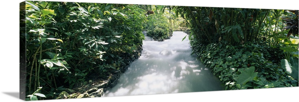 Large Solid-Faced Canvas Print Wall Art Print 48 x 16 entitled Blue Hole Gardens River, Tropical Foliage, Negril, Jamaica Solid-Faced Canvas Print entitled Blue Hole Gardens River, Tropical Foliage, Negril, Jamaica.  Multiple sizes available.  Primary colors within this image include Forest Green, Black, Light Gray.  Made in the USA.  Satisfaction guaranteed.  Inks used are latex-based and designed to last.  Archival inks prevent fading and preserve as much fine detail as possible with no over-saturation or color shifting.  Canvas depth is 1.25 and includes a finished backing with pre-installed hanging hardware.