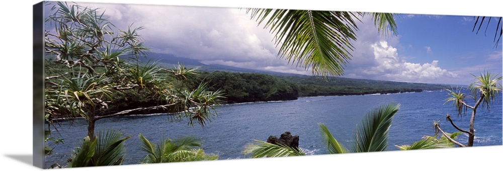 Large Solid-Faced Canvas Print Wall Art Print 48 x 16 entitled Botanical garden at the coast, Kahanu Garden, National Trop... Solid-Faced Canvas Print entitled Botanical garden at the coast, Kahanu Garden, National Tropical Botanical Garden, Hana, Maui, Hawaii.  Panoramic photograph of the ocean under a cloudy sky seen from behind the leaves of a lush tropical forest.  Multiple sizes available.  Primary colors within this image include Gray, White, Dark Forest Green, Gray Blue.  Made in the USA.  Satisfaction guaranteed.  Inks used are latex-based and designed to last.  Archival inks prevent fading and preserve as much fine detail as possible with no over-saturation or color shifting.  Canvas is handcrafted and made-to-order in the United States using high quality artist-grade canvas.