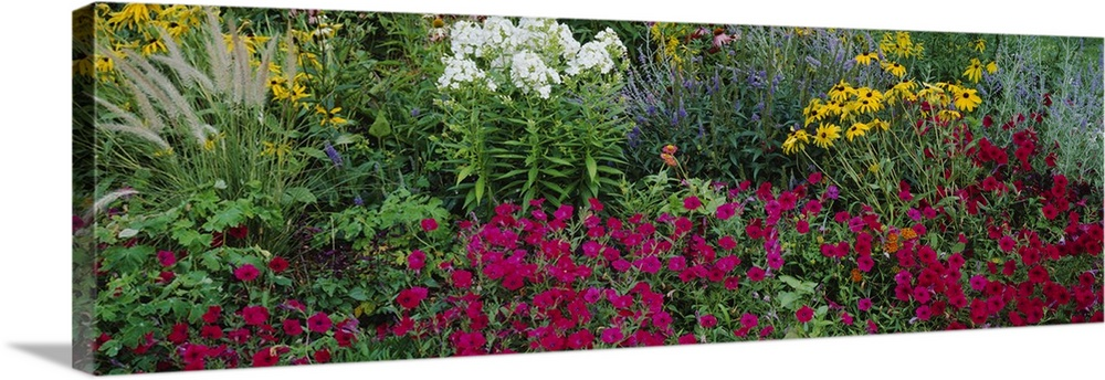 Large Solid-Faced Canvas Print Wall Art Print 48 x 16 entitled Close-up of flowers in a garden Solid-Faced Canvas Print entitled Close-up of flowers in a garden.  Multiple sizes available.  Primary colors within this image include Brown, Forest Green, Plum, Dark Forest Green.  Made in USA.  Satisfaction guaranteed.  Inks used are latex-based and designed to last.  Canvas depth is 1.25 and includes a finished backing with pre-installed hanging hardware.  Canvas is handcrafted and made-to-order in the United States using high quality artist-grade canvas.
