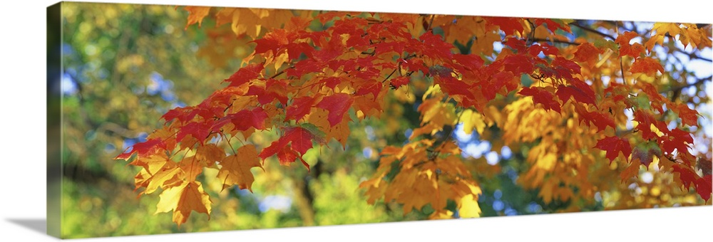Solid-Faced Canvas Print Wall Art entitled Fall Foliage Guilford Baltimore City