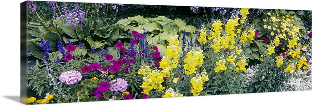 Large Solid-Faced Canvas Print Wall Art Print 48 x 16 entitled Flowering Border Niagara Parks Botanical Gardens Ontario Ca... Solid-Faced Canvas Print entitled Flowering Border Niagara Parks Botanical Gardens Ontario Canada.  Multiple sizes available.  Primary colors within this image include Yellow, Dark Purple, Black, White.  Made in the USA.  All products come with a 365 day workmanship guarantee.  Archival-quality UV-resistant inks.  Canvas is handcrafted and made-to-order in the United States using high quality artist-grade canvas.  Featuring a proprietary design, our canvases produce the tightest corners without any bubbles, ripples, or bumps and will not warp or sag over time.